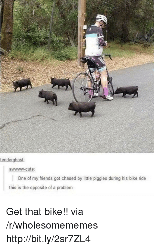 Awwww Cute: tenderghost  awwww-cute  One of my friends got chased by little piggies during his bike ride  this is the opposite of a problem Get that bike!! via /r/wholesomememes http://bit.ly/2sr7ZL4