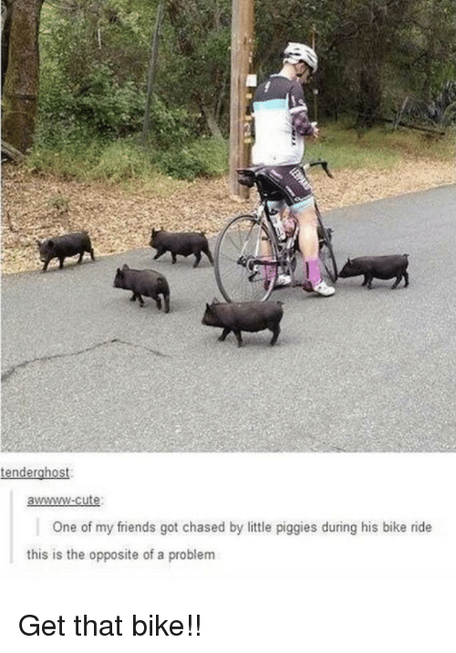 Awwww Cute: tenderghost  awwww-cute  One of my friends got chased by little piggies during his bike ride  this is the opposite of a problem Get that bike!!
