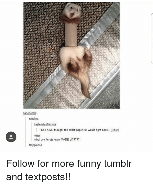 Backes: tendigo  She never thought the toilet paper roll would fight back liesst  what  what are ferrets even MADE of?2??7  Happiness Follow for more funny tumblr and textposts!!