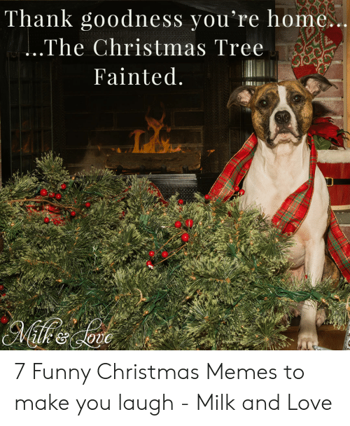 Christmas, Funny, and Love: Thank goodness you're home.  The Christmas Tree  Fainted 7 Funny Christmas Memes to make you laugh - Milk and Love