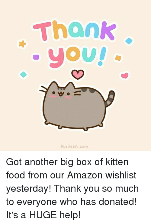 Pusheens: Thank  yoU!  Pusheen com Got another big box of kitten food from our Amazon wishlist yesterday! Thank you so much to everyone who has donated! It's a HUGE help!