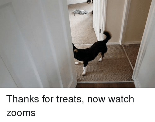 Zoomies: Thanks for treats, now watch zooms