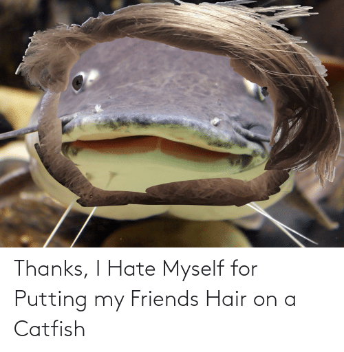 A Catfish: Thanks, I Hate Myself for Putting my Friends Hair on a Catfish