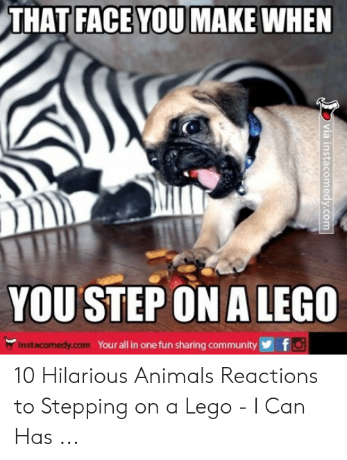 Hilarious Animals: THAT FACE YOU MAKE WHEN  YOUSTEP ON A LEGO  Your all in one fun sharing communityf  instacomedy.com 10 Hilarious Animals Reactions to Stepping on a Lego - I Can Has ...