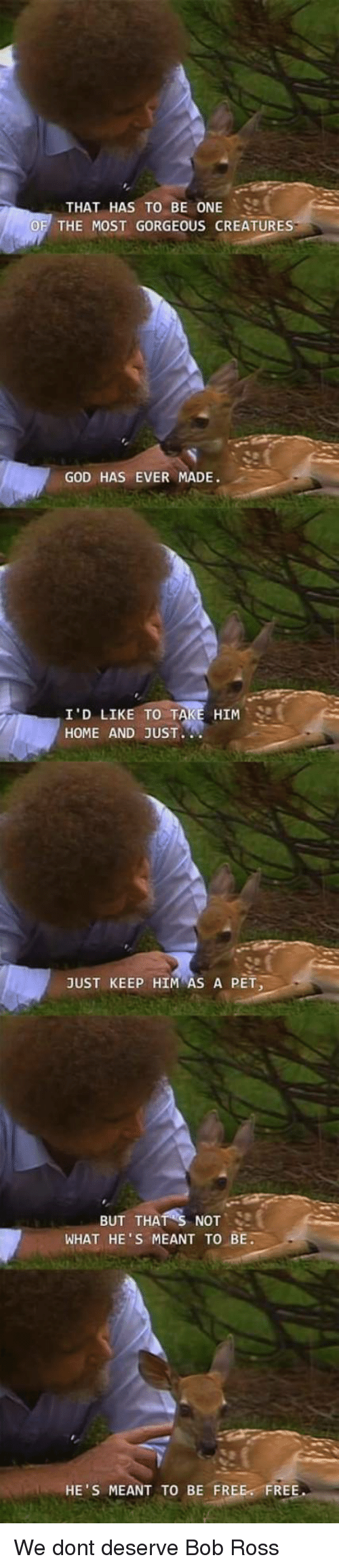 God, Bob Ross, and Free: THAT HAS TO BE ONE ..  THE MOST GORGEOUS CREATURE  GOD HAS EVER MADE.  HIM  I'D LIKE TO T  HOME AND JUST  JUST KEEP HIM AS A PET  BUT THATS NOT, SI  WHAT HE'S MEANT TO BE.  HE'S MEANT TO BE FREE FREE We dont deserve Bob Ross
