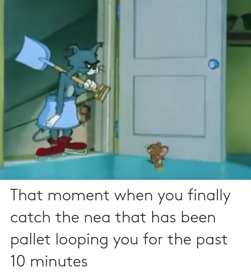 that moment when you: That moment when you finally catch the nea that has been pallet looping you for the past 10 minutes
