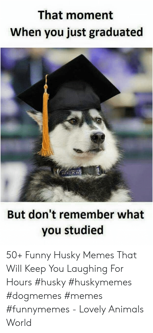 Animals, Funny, and Memes: That moment  When you just graduated  But don't remember what  you studied 50+ Funny Husky Memes That Will Keep You Laughing For Hours #husky #huskymemes #dogmemes #memes #funnymemes - Lovely Animals World