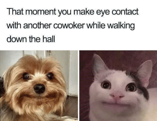 make-eye-contact: That moment you make eye contact  with another cowoker while walking  down the hall