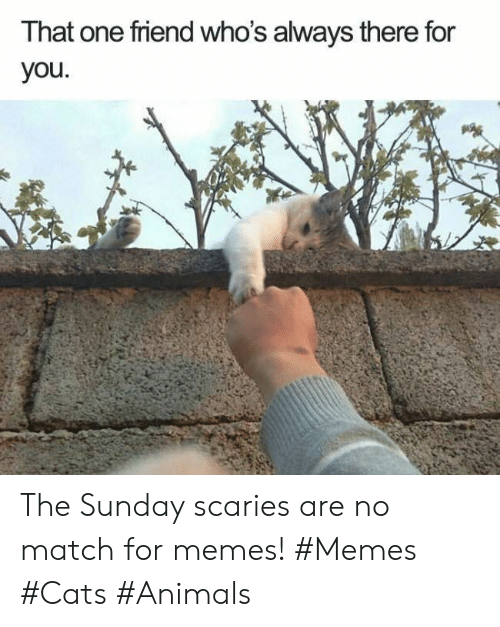Animals, Cats, and Memes: That one friend who's always there for  you The Sunday scaries are no match for memes! #Memes #Cats #Animals