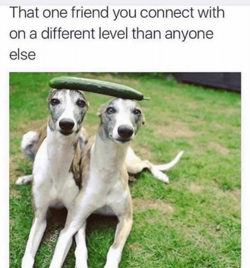 One, Friend, and You: That one friend you connect with  on a different level than anyone  else