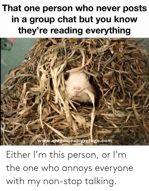 Group Chat, Chat, and Never: That one person who never posts  in a group chat but you know  they're reading everything  www.qldguineapigrefuge.com Either I'm this person, or I'm the one who annoys everyone with my non-stop talking.