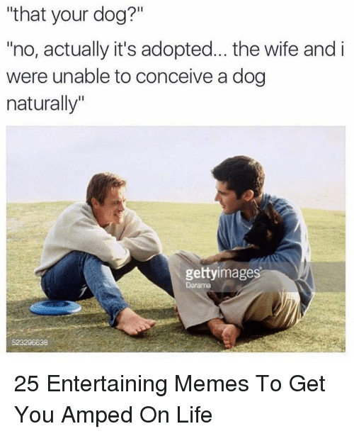 """Life, Memes, and Wife: """"that your dog?""""  no, actually it's adopted... the wife and i  were unable to conceive a dog  naturally""""  gettyimages  Darama  523206638 25 Entertaining Memes To Get You Amped On Life"""