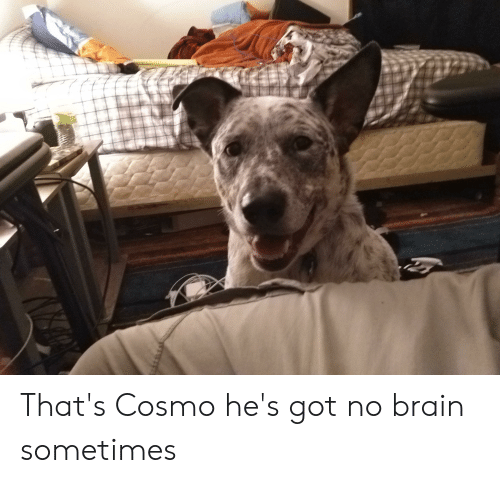 Brain, Got, and Cosmo: That's Cosmo he's got no brain sometimes