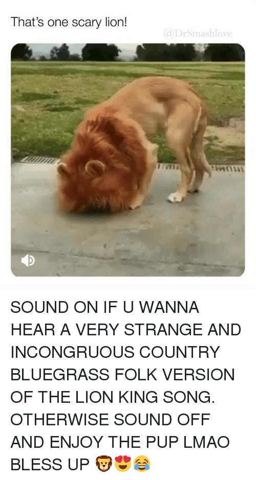 Bless Up, Lmao, and Memes: That's one scary lion!  @DrSmashlove SOUND ON IF U WANNA HEAR A VERY STRANGE AND INCONGRUOUS COUNTRY BLUEGRASS FOLK VERSION OF THE LION KING SONG. OTHERWISE SOUND OFF AND ENJOY THE PUP LMAO BLESS UP 🦁😍😂