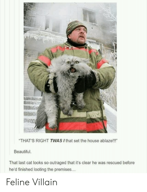 "looting: THATS RIGHT TWAS Ithat set the house ablaze!!!""  Beautiful  That last cat looks so outraged that it's clear he was rescued before  he'd finished looting the premises... Feline Villain"