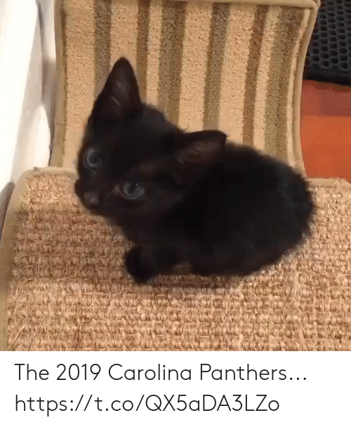 Carolina Panthers: The 2019 Carolina Panthers... https://t.co/QX5aDA3LZo