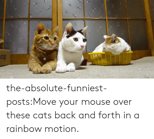 Cats, Target, and Tumblr: the-absolute-funniest-posts:Move your mouse over these cats back and forth in a rainbow motion.