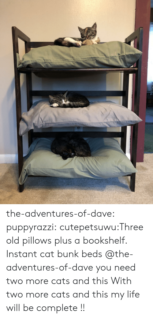 Instant: the-adventures-of-dave:  puppyrazzi:  cutepetsuwu:Three old pillows plus a bookshelf. Instant cat bunk beds  @the-adventures-of-dave you need two more cats and this  With two more cats and this my life will be complete !!
