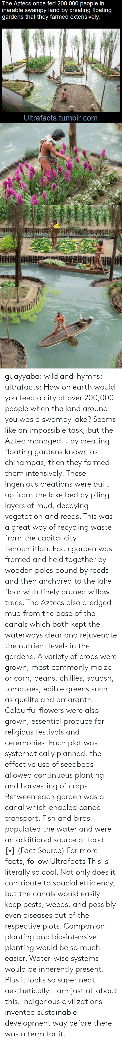 Colourful: The Aztecs once fed 200,000 people in  inarable swampy land by creating floating  gardens that they farmed extensively.  Ultrafacts.tumblr.com guayyaba: wildland-hymns:  ultrafacts:  How on earth would you feed a city of over 200,000 people when the land around you was a swampy lake? Seems like an impossible task, but the Aztec managed it by creating floating gardens known as chinampas, then they farmed them intensively. These ingenious creations were built up from the lake bed by piling layers of mud, decaying vegetation and reeds. This was a great way of recycling waste from the capital city Tenochtitlan. Each garden was framed and held together by wooden poles bound by reeds and then anchored to the lake floor with finely pruned willow trees. The Aztecs also dredged mud from the base of the canals which both kept the waterways clear and rejuvenate the nutrient levels in the gardens. A variety of crops were grown, most commonly maize or corn, beans, chillies, squash, tomatoes, edible greens such as quelite and amaranth. Colourful flowers were also grown, essential produce for religious festivals and ceremonies. Each plot was systematically planned, the effective use of seedbeds allowed continuous planting and harvesting of crops. Between each garden was a canal which enabled canoe transport. Fish and birds populated the water and were an additional source of food. [x] (Fact Source) For more facts, follow Ultrafacts   This is literally so cool. Not only does it contribute to spacial efficiency, but the canals would easily keep pests, weeds, and possibly even diseases out of the respective plots. Companion planting and bio-intensive planting would be so much easier. Water-wise systems would be inherently present. Plus it looks so super neat aesthetically. I am just all about this.   Indigenous civilizations invented sustainable development way before there was a term for it.