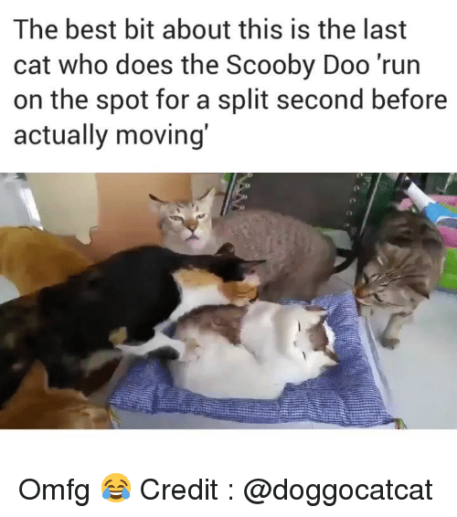 split second: The best bit about this is the last  cat who does the Scooby Doo 'run  on the spot for a split second before  actually moving Omfg 😂 Credit : @doggocatcat