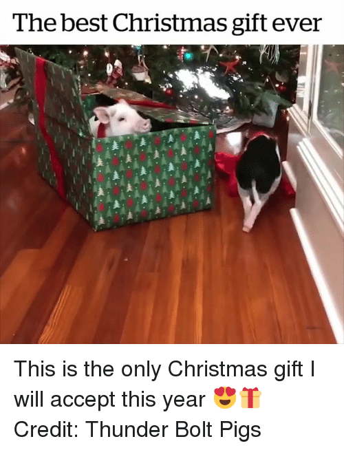 Christmas, Best, and Bolt: The best Christmas gift ever This is the only Christmas gift I will accept this year 😍🎁  Credit: Thunder Bolt Pigs