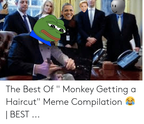"""Haircut, Meme, and Best: The Best Of """" Monkey Getting a Haircut"""""""