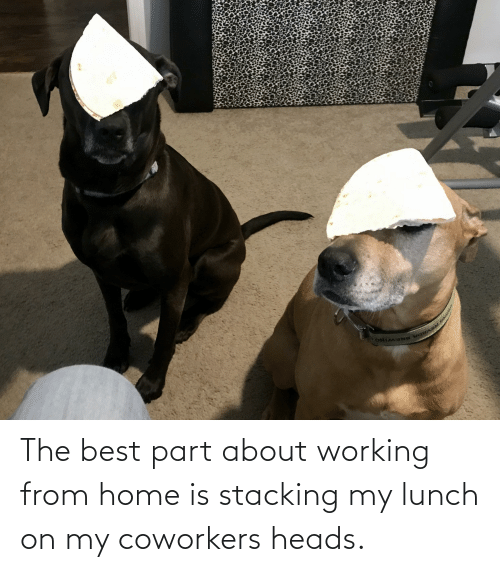 Home Is: The best part about working from home is stacking my lunch on my coworkers heads.