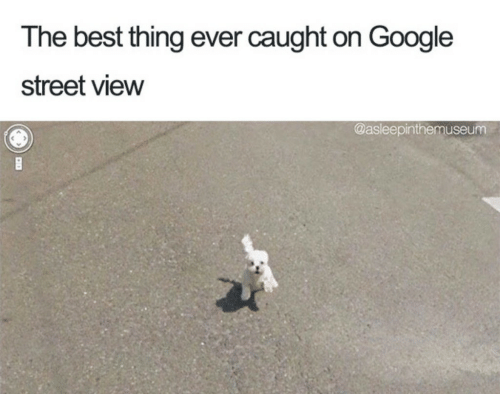 Google, Best, and Street View: The best thing ever caught on Google  street view  @asleepinthemuseum
