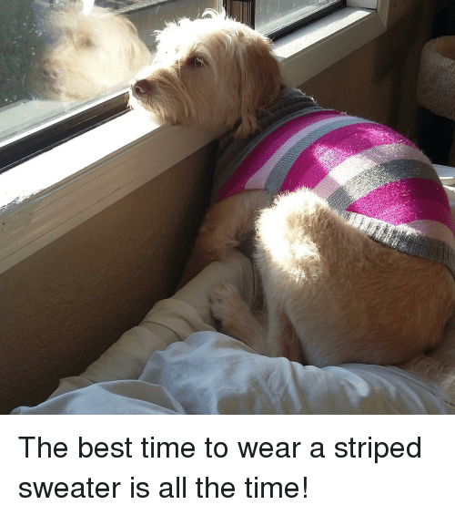25 Best Memes About The Best Time To Wear A Striped Sweater Is