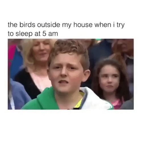 5 Am, Memes, and My House: the birds outside my house when i try  to sleep at 5 am