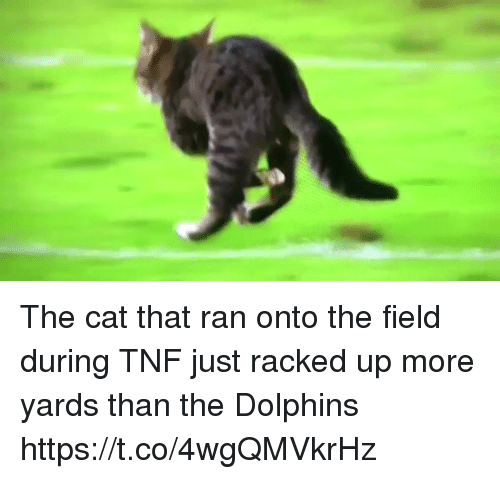 Football, Nfl, and Sports: The cat that ran onto the field during TNF just racked up more yards than the Dolphins https://t.co/4wgQMVkrHz