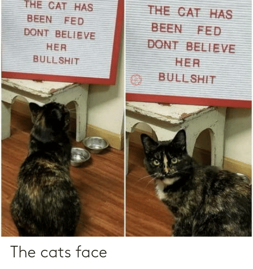 face: The cats face