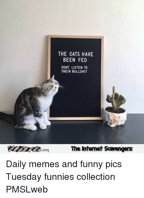 Cats, Funny, and Memes: THE CATS HAVE  BEEN FED  DONT LISTEN TO  THEIR BULLSHIT  The Intemet Scavengers <p>Daily memes and funny pics  Tuesday funnies collection  PMSLweb </p>