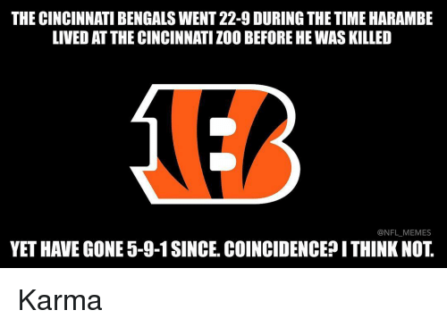 Cincinnati Bengals: THE CINCINNATI BENGALS WENT 22-9 DURING THE TIME HARAMBE  LIVED AT THE CINCINNATI ZOO BEFORE HE WAS KILLED  @NFL MEMES  YET HAVE GONE 5-9-1 SINCE. COINCIDENCE?ITHINK NOT Karma