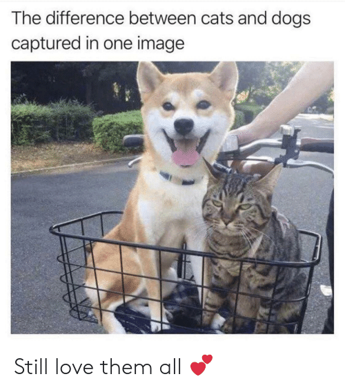Cats, Dogs, and Love: The difference between cats and dogs  captured in one image Still love them all 💕