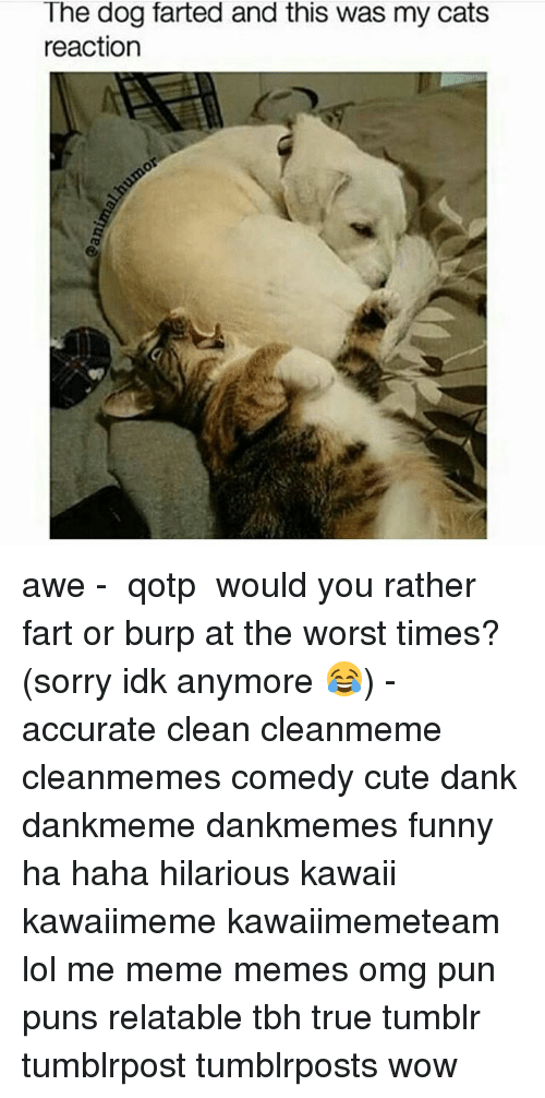 I was trying to resist pinning this one; really I was. But ...   Animal Fart Memes