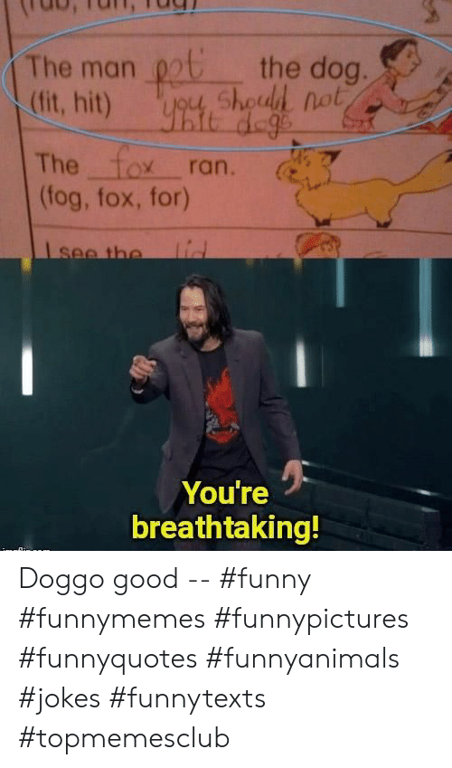 Funny, Good, and Jokes: the dog.  ygu, Shoud not  The man  (fit, hit)  The fox ran.  (fog, fox, for)  lid  Isee the  You're  breathtaking! Doggo good -- #funny #funnymemes #funnypictures #funnyquotes #funnyanimals #jokes #funnytexts #topmemesclub