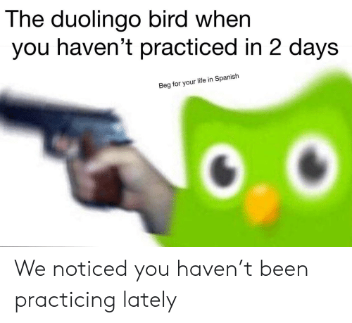 When You Havent: The duolingo bird when  you haven't practiced in 2 days  Beg for your life in Spanish We noticed you haven't been practicing lately