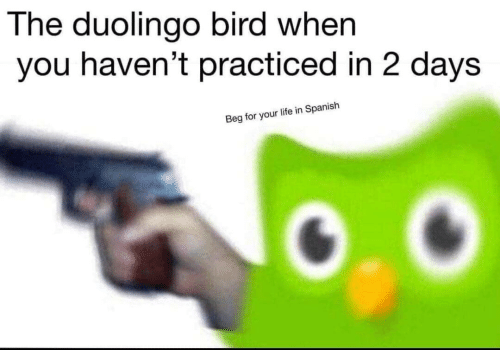Life, Spanish, and You: The duolingo bird when  you haven't practiced in 2 days  Beg for your life in Spanish