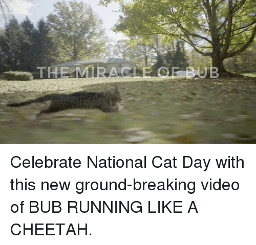 New Grounds: THE  EBUB Celebrate National Cat Day with this new ground-breaking video of BUB RUNNING LIKE A CHEETAH.