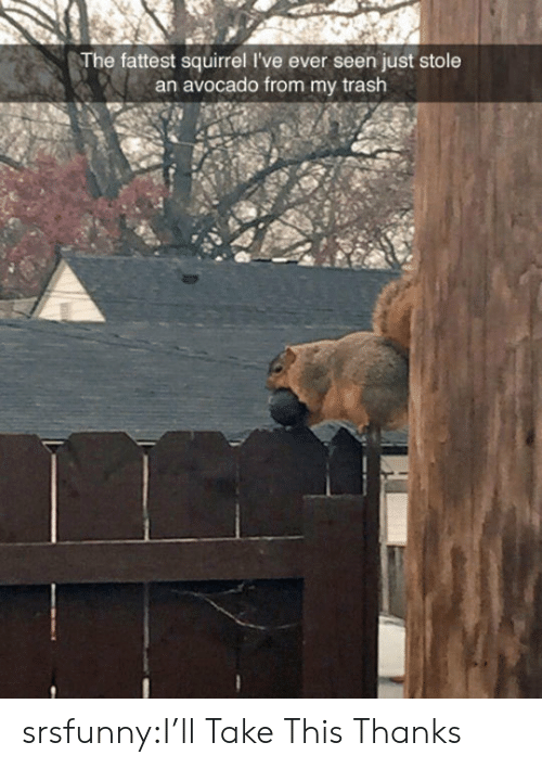 fattest: The fattest squirrel I've ever seen just stole  an avocado from my trash srsfunny:I'll Take This Thanks