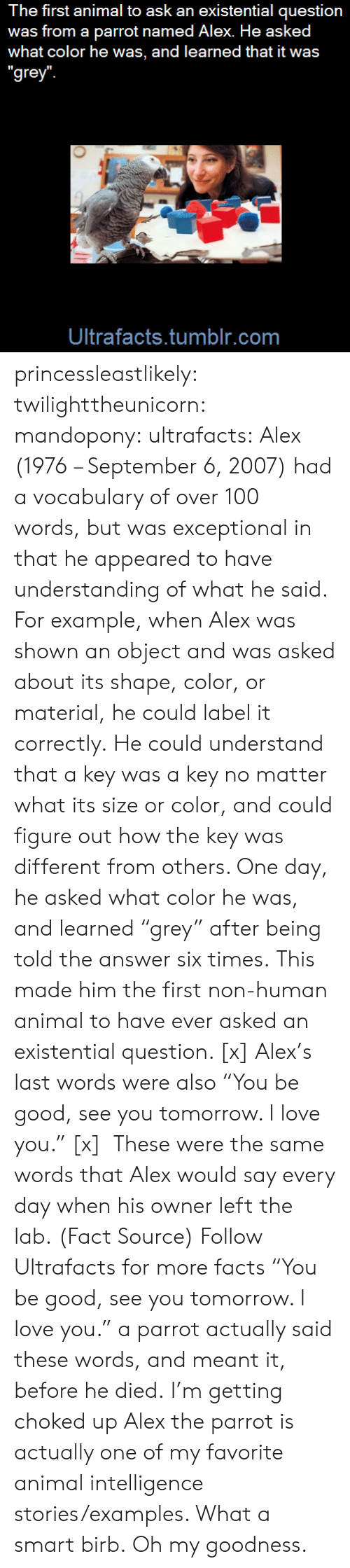 """exceptional: The first animal to ask an existential question  was from a parrot named Alex. He asked  what color he was, and learned that it was  """"grey  Ultrafacts.tumblr.com princessleastlikely: twilighttheunicorn:  mandopony:  ultrafacts:  Alex (1976 – September 6, 2007) had a vocabulary of over 100 words,but was exceptional in that he appeared to have understanding of what he said. For example, when Alex was shown an object and was asked about its shape, color, or material, he could label it correctly.He could understand that a key was a key no matter what its size or color, and could figure out how the key was different from others. One day, he asked what color he was, and learned """"grey"""" after being told the answer six times.This made him the first non-human animal to have ever asked an existential question. [x] Alex's last words were also """"You be good, see you tomorrow. I love you."""" [x] These were the same words that Alex would say every day when his owner left the lab. (Fact Source) Follow Ultrafacts for more facts   """"You be good, see you tomorrow. I love you."""" a parrot actually said these words, and meant it, before he died. I'm getting choked up  Alex the parrot is actually one of my favorite animal intelligence stories/examples. What a smart birb.   Oh my goodness."""