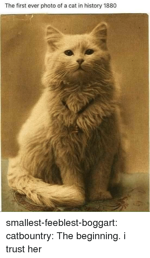 Tumblr, Blog, and History: The first ever photo of a cat in history 1880 smallest-feeblest-boggart:  catbountry: The beginning. i trust her