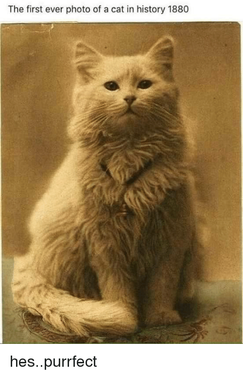 History, Cat, and Photo: The first ever photo of a cat in history 1880 hes..purrfect