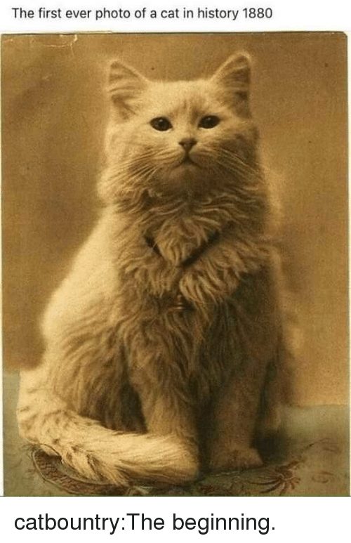 Tumblr, Blog, and History: The first ever photo of a cat in history 1880 catbountry:The beginning.