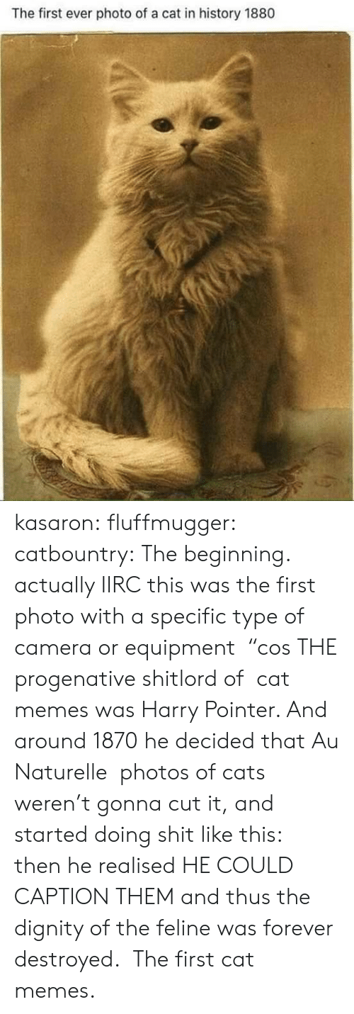 "First Ever: The first ever photo of a cat in history 1880 kasaron: fluffmugger:  catbountry: The beginning. actually IIRC this was the first photo with a specific type of camera or equipment  ""cos THE progenative shitlord of  cat memes was Harry Pointer. And around 1870 he decided that Au Naturelle  photos of cats weren't gonna cut it, and started doing shit like this:  then he realised HE COULD CAPTION THEM and thus the dignity of the feline was forever destroyed.   The first cat memes."