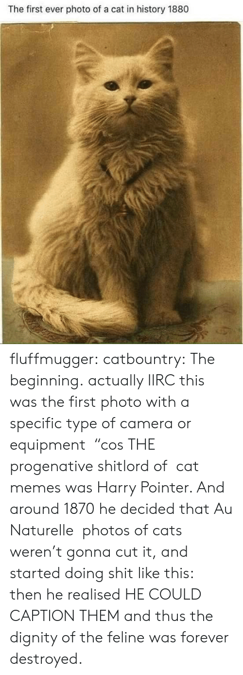 "First Ever: The first ever photo of a cat in history 1880 fluffmugger: catbountry: The beginning. actually IIRC this was the first photo with a specific type of camera or equipment  ""cos THE progenative shitlord of  cat memes was Harry Pointer. And around 1870 he decided that Au Naturelle  photos of cats weren't gonna cut it, and started doing shit like this:  then he realised HE COULD CAPTION THEM and thus the dignity of the feline was forever destroyed."