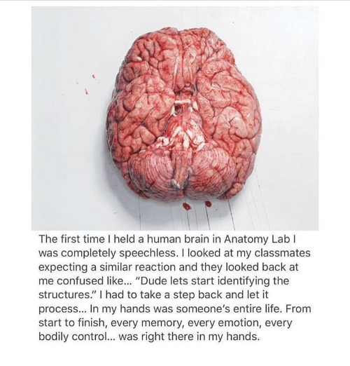 """Look Back At Me: The first time held a human brain in Anatomy Lab  was completely speechless. I looked at my classmates  expecting a similar reaction and they looked back at  me confused like  """"Dude lets start identifying the  structures"""" l had to take a step back and let it  process... In my hands was someone's entire life. From  start to finish, every memory, every emotion, every  bodily control... was right there in my hands."""