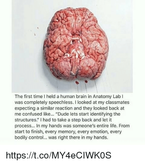 """Look Back At Me: The first time I held a human brain in Anatomy Lab I  was completely speechless  I looked at my classmates  expecting a similar reaction and they looked back at  me confused like... """"Dude lets start identifying the  structures"""" l had to take a step back and let it  process... In my hands was someone's entire life. From  start to finish, every memory, every emotion, every  bodily control  was right there in my hands https://t.co/MY4eCIWK0S"""