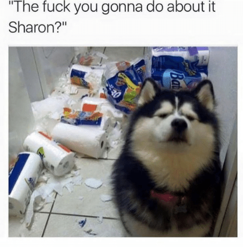 Fuck You, Fuck, and You: The fuck you gonna do about it  Sharon?""